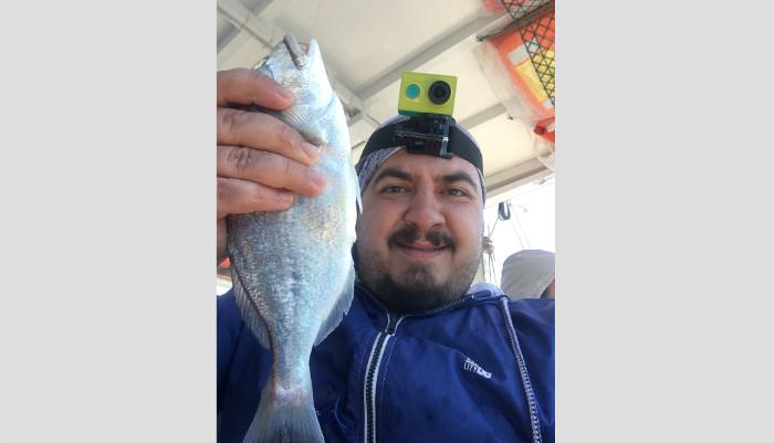çipura balık avı